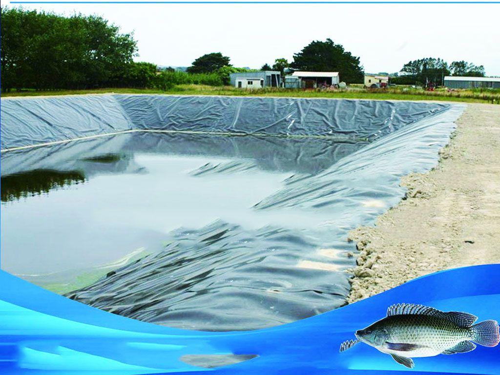 bạt lót hồ cá tphcm, Báo giá bán lẻ Bạt Lót Bể Cá Cảnh nhựa HDPE giá rẻ