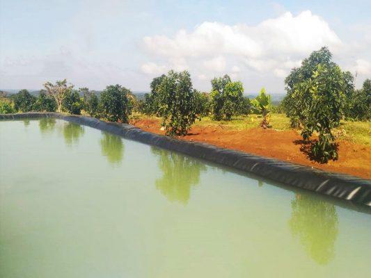 Bạt HDPE Làm Hồ Chứa Nước Tưới Cây, Nuôi Trồng Thủy Hải Sải Giá Rẻ