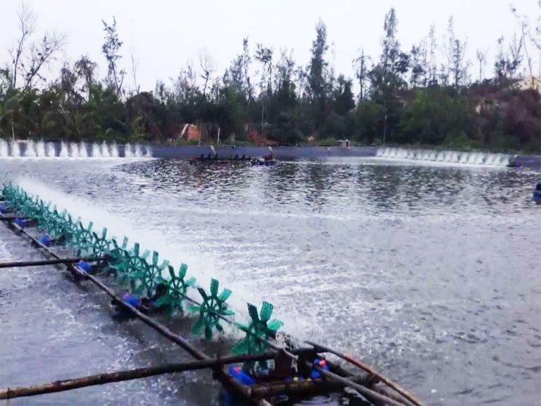 Giá bạt lót hồ cá, Bạt Lót Hồ Nuôi Tôm, Nuôi Cá, Màng Chống Thấm HDPE Giá Rẻ